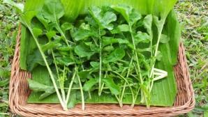 RUCOLA, una dintre cele mai revigorante plante. Cum s-o incluzi în alimentaţie