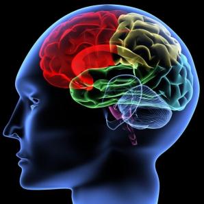 Oamenii de ştiinţă au anunţat că au identificat o regiune a creierului care controlează îmbătrânirea fizică