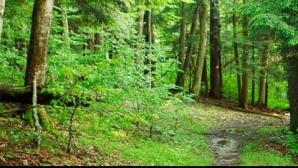 Gorj: Fata de 16 ani răpită de un bărbat spune că a fost bătută, iar noaptea a dormit în pădure