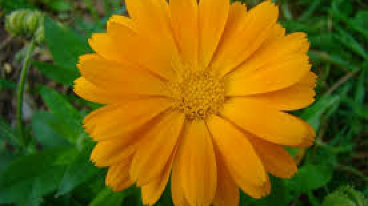 FLORII: Cele mai rare nume de flori