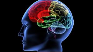 8 intervale în care creierul tău funcţionează cel mai bine