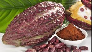 Beneficiile consumului de cacao: Ar putea opri evoluţia maladiei Alzheimer