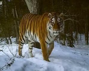 IMAGINI UNICE cu unul dintre CELE MAI RARE şi MISTERIOASE ANIMALE de pe planetă