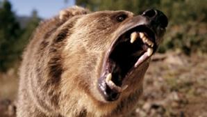Bărbat mutilat de un urs