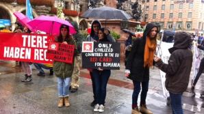 Protest la Munchen contra eutanasierii maidanezilor din România