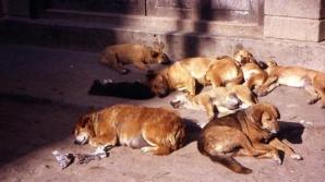Copil ucis de câine. Şase maidanezi, ridicaţi de pe proprietatea unei firme. Unul avea urme de sânge / Foto: descopera.ro