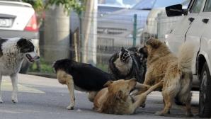 Judecător CCR: Nu sunt foarte convins că eutanasierea câinilor va eradica fenomenul