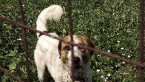 Raport IML. Copilul muşcat de câine avea sute de plăgi