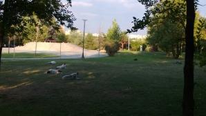 Parcul IOR din Capitală. Regatul câinilor fără stăpân