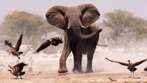 LOVITURĂ PENTRU BBC: Dezvăluirile unui cameraman despre documentarele cu animale