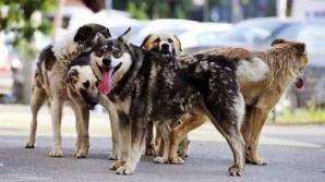 Bărbat muşcat de 6 câini, la Vaslui