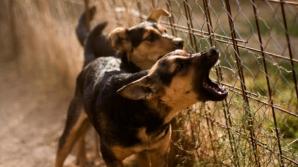 Copil în stare gravă la spital după ce a fost muşcat de faţă de mai mulţi câini de la o stână