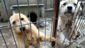 Primii 21 de câini din adăpostul din Timișoara au fost eutanasiaţi