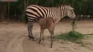 Creatură neobișnuită la o grădină zoologică din Mexic