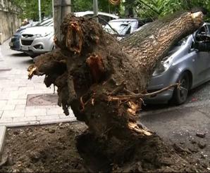 PANICĂ ÎN CAPITALĂ, după VIJELIE: un copac a căzut peste două maşini