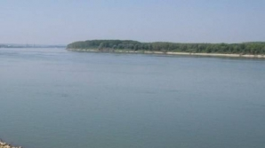 COD GALBEN pe Dunăre, pe sectorul aval Călăraşi