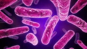 Ce sunt probioticele şi cum luptă cu obezitatea