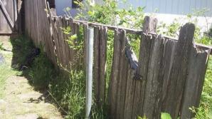 ALEGERI PREZIDENŢIALE 2014. Pungi cu alimente, atârnate de porţile unor localnici,în Bistriţa-Năsăud