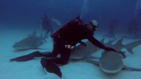 Momentul incredibil în care un scafandru face masaj unui rechin