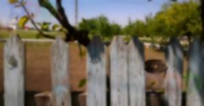 Minune în curtea unui localnic din Osmancea. Tot satul vorbeşte de ea / Foto: reporterntv.ro