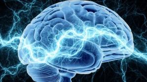 Zona care stă la baza fericirii, indentificată pe creieri. Iată unde se află