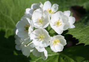 Cea mai frumoasă floare din lume. Transformare incredibilă la contactul cu apa