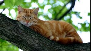 Îţi place când toarce pisica! Iată şi ce beneficii îţi aduce