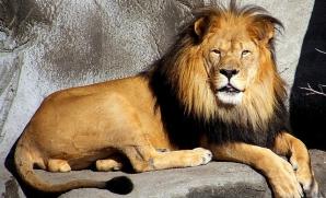 Leii care pleacă din Baia Mare