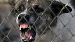 Şcoală din Timiş,obligată să achite 100.000 euro familiei unui copil cu sindrom Down muşcat de câine