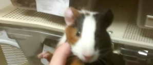 A văzut în vitrină un hamster adorabil! Când l-a luat în mână, a avut parte de şocul vieţii! Era...