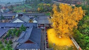 Copacul de aur