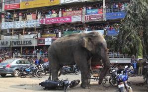 Elefantul din Bengal