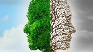 Creierul și anotimpul