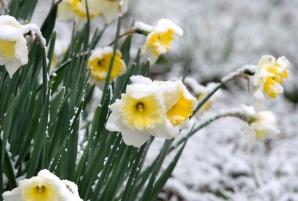 Ninge la Constanta