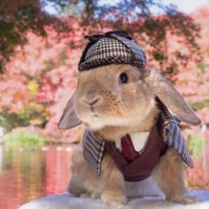 Cel mai elegant iepure din lume. PuiPui face spectacol în patru lăbuţe