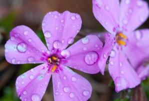 Vremea schimbă foaia: ploi şi vânt intens. Prognoza meteo pe trei zile