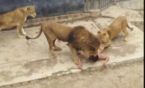 Bărbat în cuşca leilor