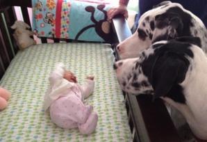 Şi-au lăsat copilul singur cu câinii. Când s-au întors, părinţii au găsit...