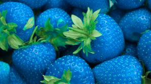Căpșunile albastre: mit sau realitate? Ai mânca asa ceva?