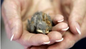 A găsit un pui de pasăre. L-a luat acasă, însă a regretat decizia. Motivul este şocant