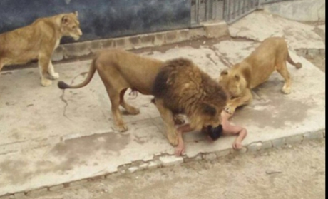 Un bărbat de 20 de ani din Chile a vrut să se sinucidă şi a ales o metodă inedită şi crudă: s-a aruncat dezbrăcat în cuşca leilor de la Zoo. Citește mai departe...