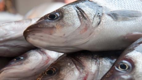 Atenție la ce cumpărați! O analiză arată că s-a găsit mercur și plumb în peștii din magazine. Specialiștii din sănătate au luat în vizor două tipuri: somonul și pangasiusul, respectiv cel mai scump și cel mai ieftin pește. Citește mai departe...