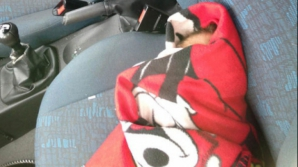 Au spart geamul mașinii să salveze un bebeluș. Polițiștii au încremenit! Ce se afla printre scutece
