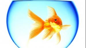 Pește singur în acvariu? e ilegal în Elveția