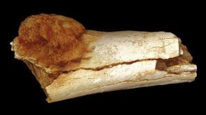 Oase vechi de milioane de ani