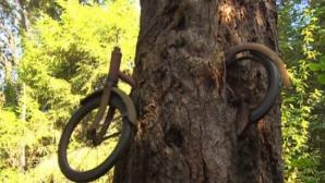 Şi-a lăsat bicicleta sprijinită de un copac şi a plecat la război. Ce MISTER ascunde celebra imagine