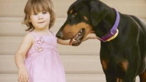 Au lăsat fetiţa de 2 ani singură cu Dobermanul în curte. Când s-au întors acasă, S-AU ÎNGROZIT!