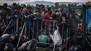 Câți imigranți au ajuns în Europa în acest an?
