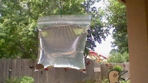 A agăţat pungi transparente umplute cu apă şi monede în dreptul geamului. Motivul incredibil!