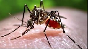 Al treilea caz de infectare cu virusul Zika, confirmat în România